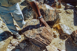 Petrified Forest, Damaraland