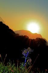 Coucher de soleil en montagne / Sunset in mountain /  Eryngium bourgatii