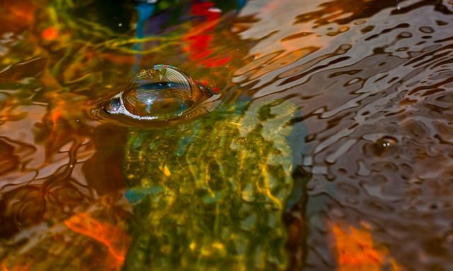 Water Bubble Pond _3268, Canon EOS DIGITAL REBEL XTI, Canon EF 50mm f/2.5 Macro