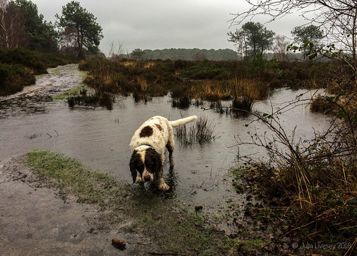 Max enjoyed the ever-expanding puddles