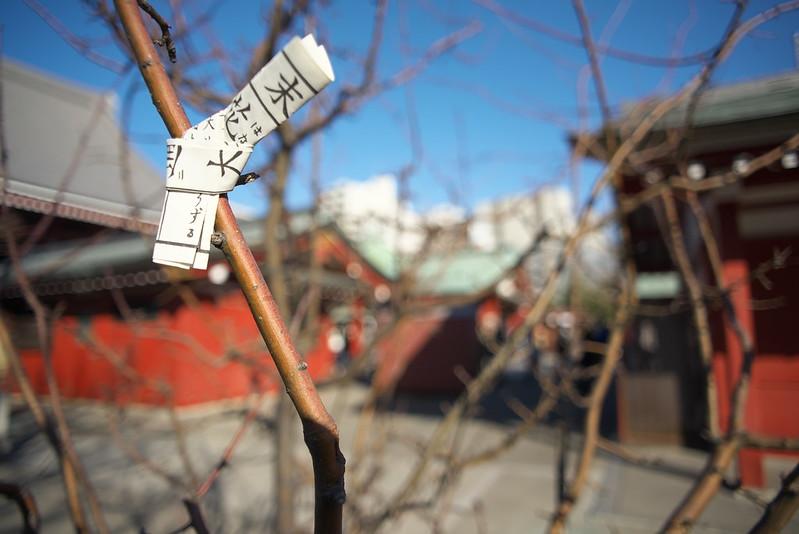 一人浅草フォトウォーク Nikon D610 + Voigtlander COLOR-SKOPAR 20mm