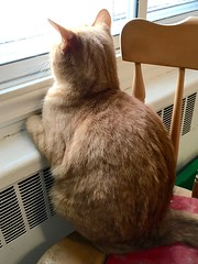 Caramel's birdwatching