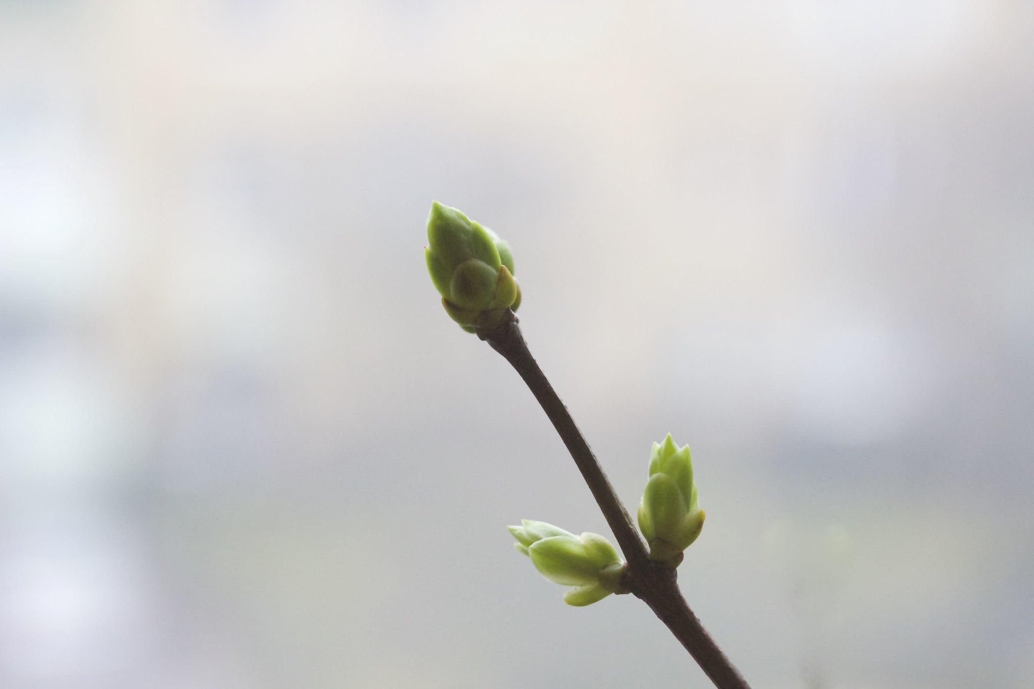 Branch of spring