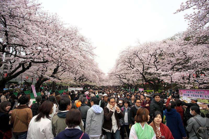 東京路地裏散歩 上野公園の桜 2016年4月2日