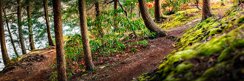 trees newyork nature forest outdoors woods woodlands hiking trail hudsonvalley putnamcounty carmelny fahnestockstatepark peltonpond searlymorninglight