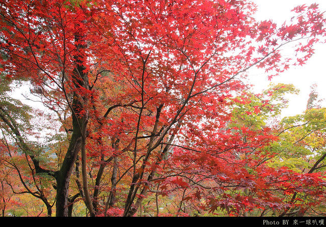 京都-永觀堂011