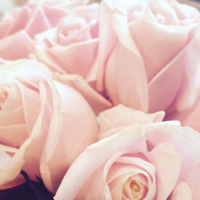 Roses from Wyatt