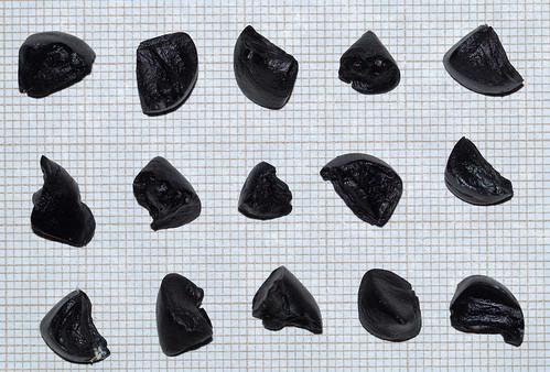 semis de Pancratium maritimum 26145630004_5eb250e7b6
