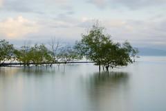 Mangroves at Port Douglas
