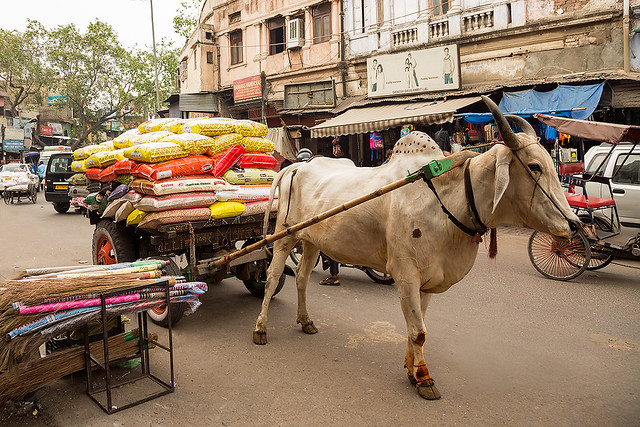 Street life in New Delhi, India.