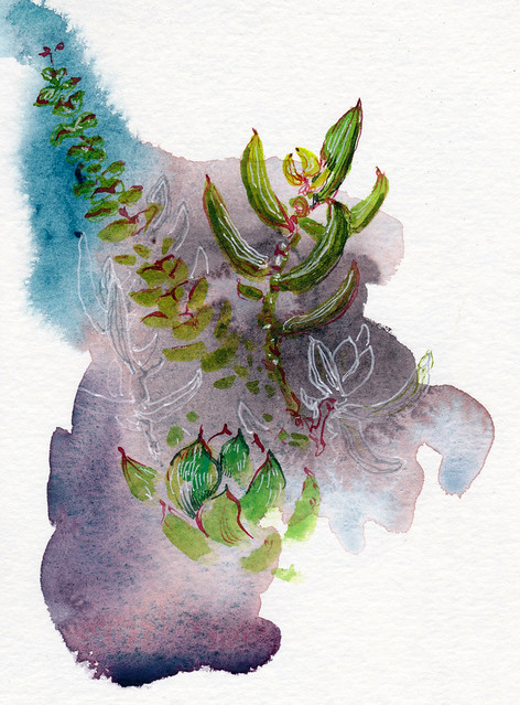 Sketchbook #95: My Succulents