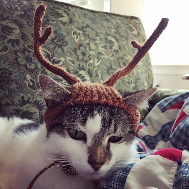 Penny in her reindeer hat