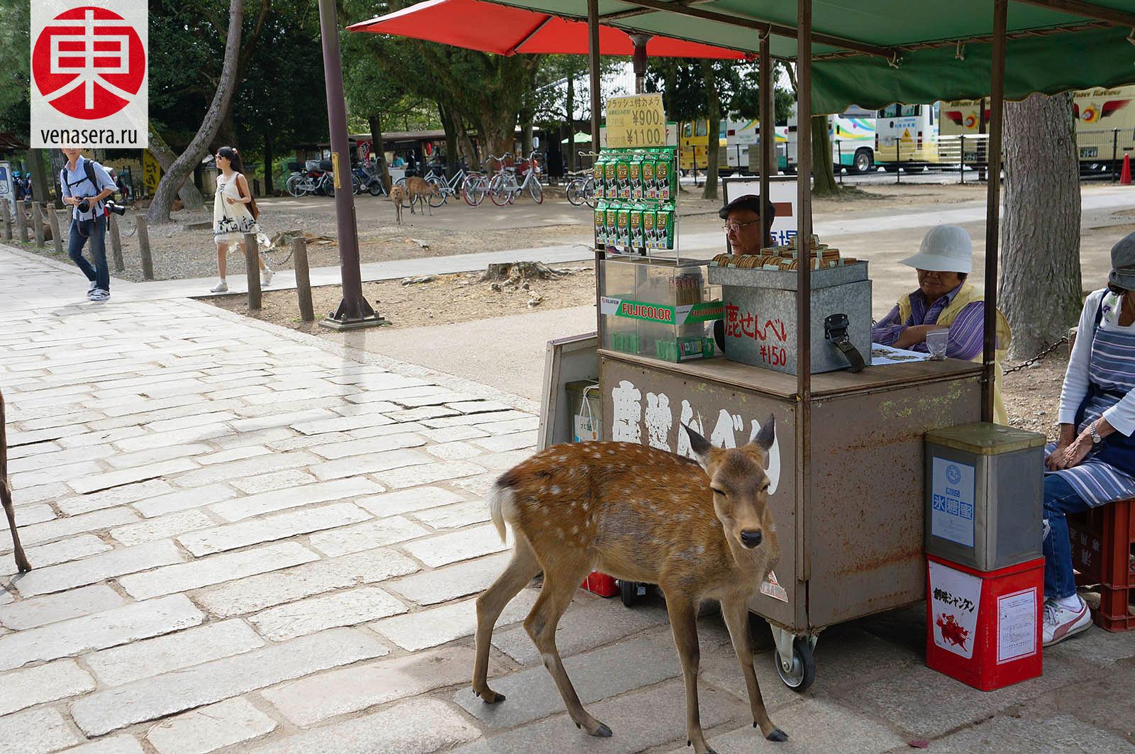 Сэмбэй для Оленей, Путешествие в Нара, Поездка в Нара, Олени в г. Нара, Парк Нара, Нара, Nara, 奈良, Япония, Japan, 日本.