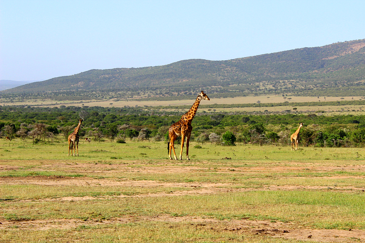 kenya_safari