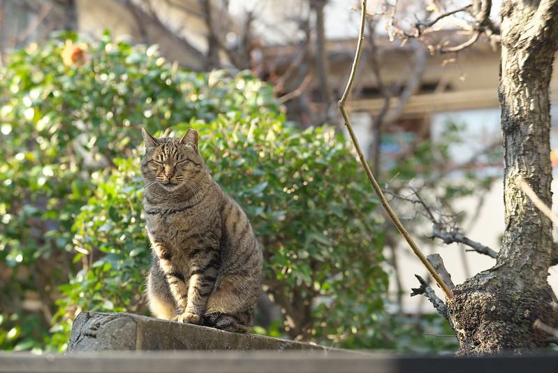 東京路地裏散歩 日暮里・谷中 2016年2月4日