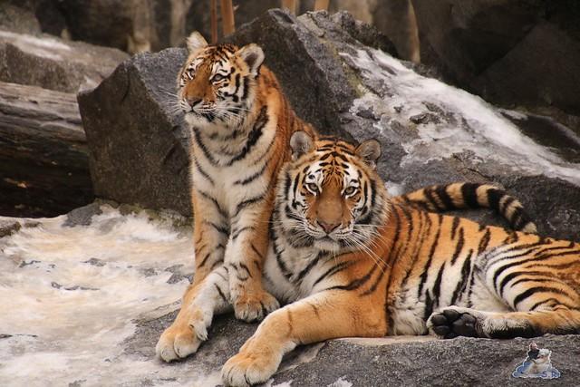 Tierpark Berlin 24.01.2016   108