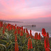 Morning at La Jolla Shores by Wei, Willa