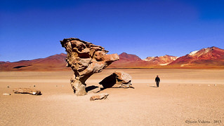 Rock Tree of the Desert