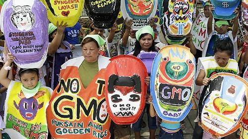 พืช GMOs