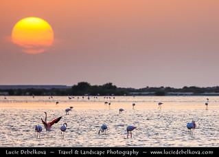 United Arab Emirates - UAE - Ras Al Khaimah - Flamingo bay at the Sunset