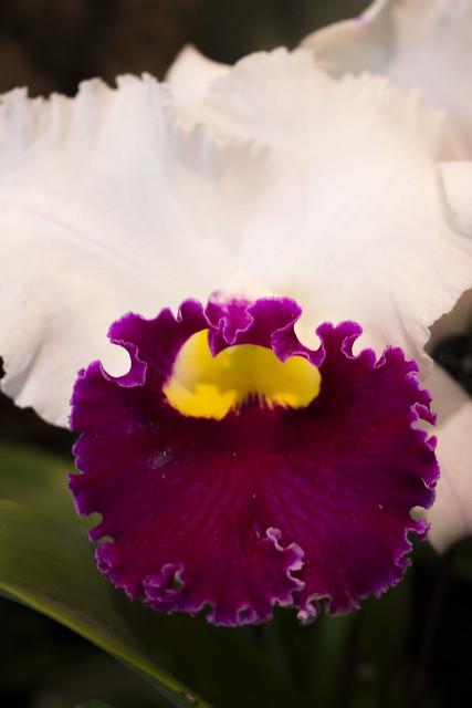 Orchid Show 2016- Chicago Botanic Garden