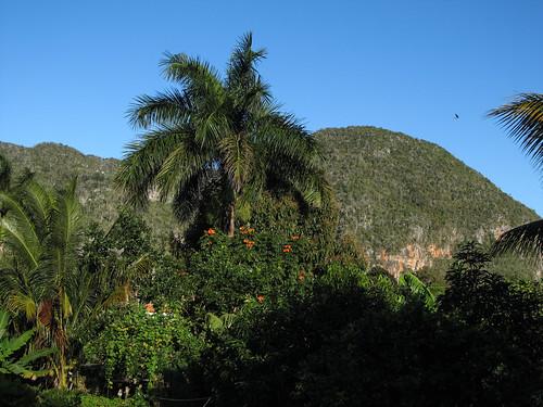 Viñales: vue de la terrasse de notre chambre
