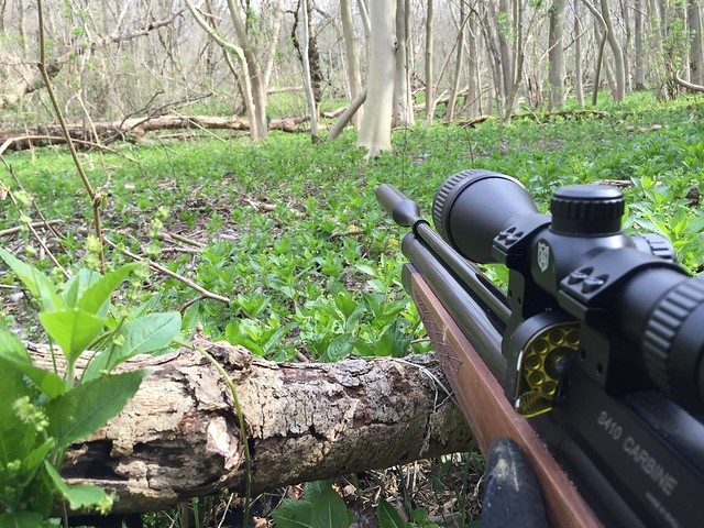 Air rifle with view of woods
