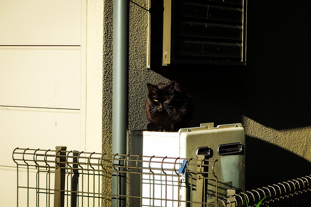 Today's Cat@2016-04-21