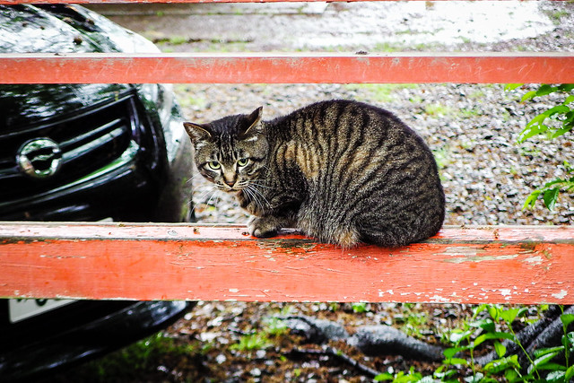 Today's Cat@2016-04-29