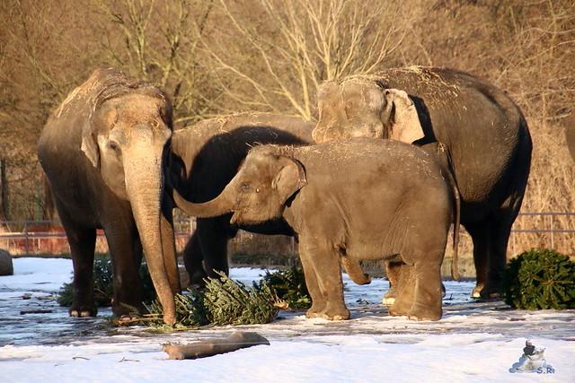 Tierpark Berlin 09.01.2016  0107