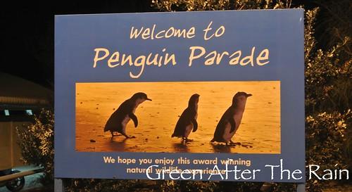 150911l Phillip Island Penguin Parade _30