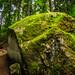 Triberg. Schwarzwald. Folge dem Pfad. by guigonliz