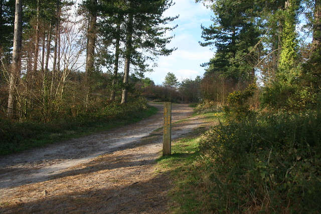 The Sika Trail, Wareham Forest