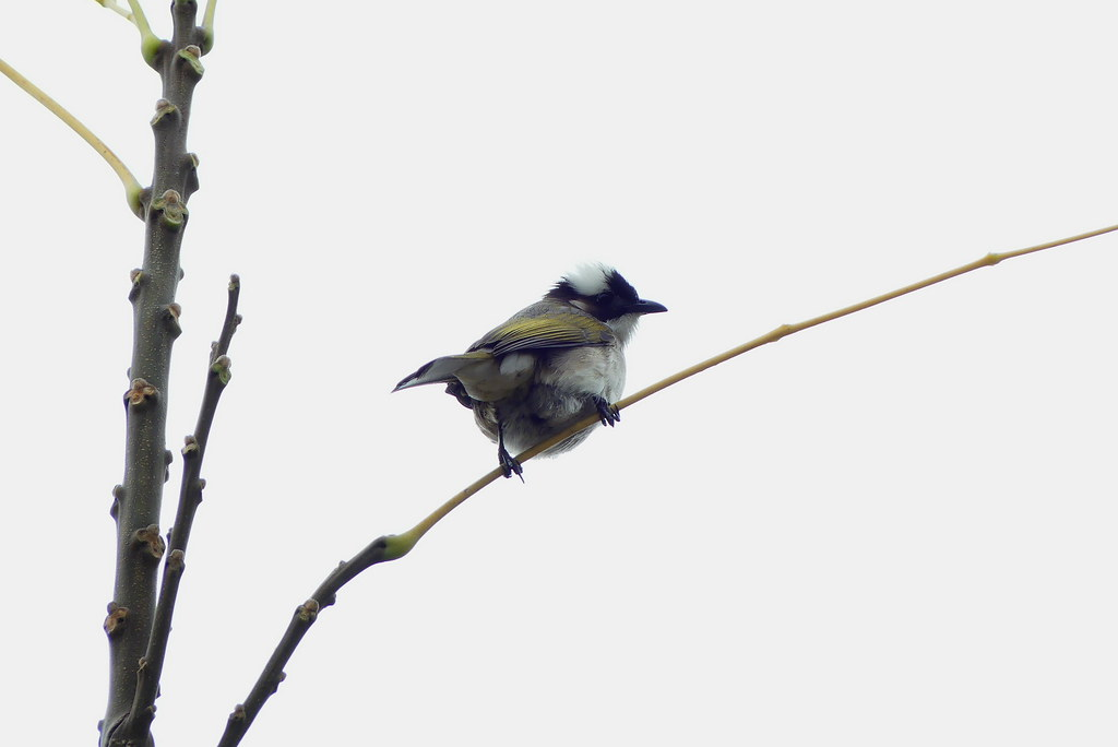 鳥拍幾張,預祝P友新年快樂