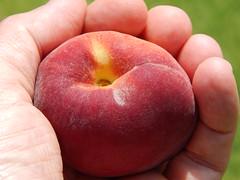starr-140417-0259-Prunus_persica_var_persica-Florida_Prince_fruit-Hawea_Pl_Olinda-Maui