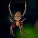 Charlet's Web by A Durst Photo