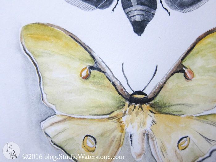 Sketchbook: Butterflies & Bees