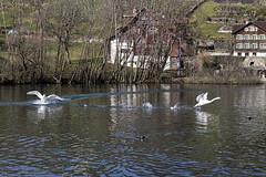 Werdenbergersee - Verfolgungsjagd