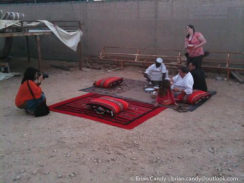farm camel qa qatar alrayyan