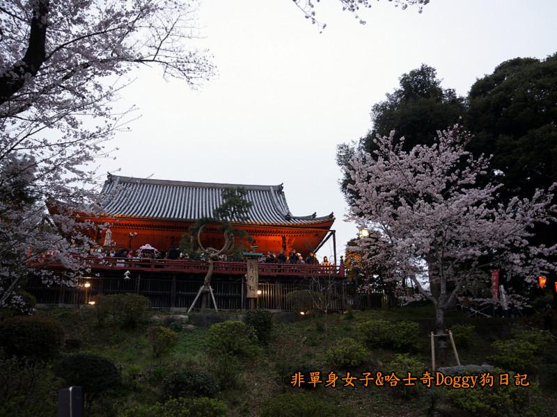 日本東京上野恩賜公園櫻花04