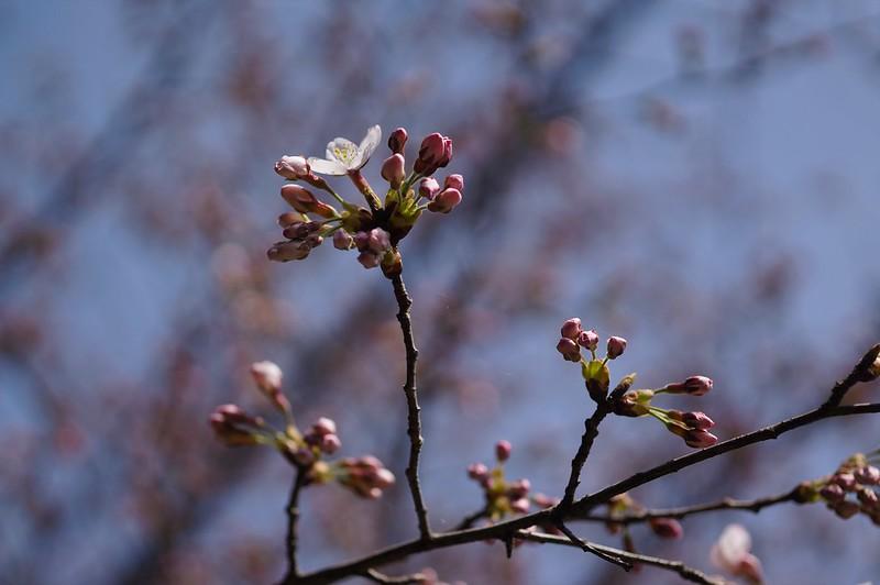 Bloom declaration
