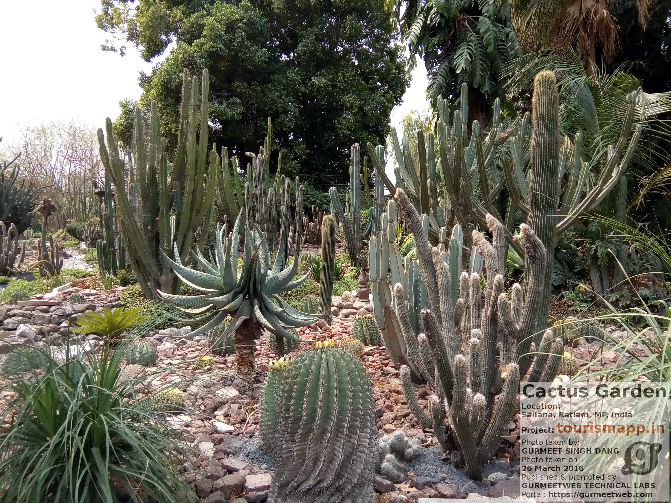 Cactus Garden, Sailana, Ratlam, MP, India