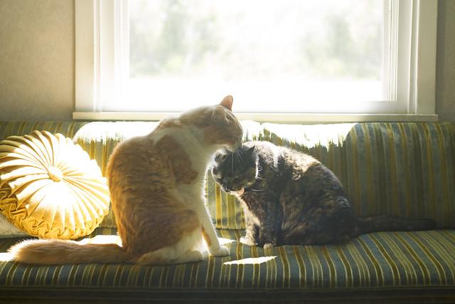 cat buds