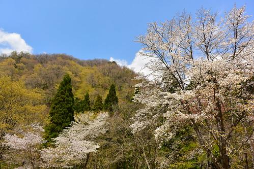 春の山.20160419.1128