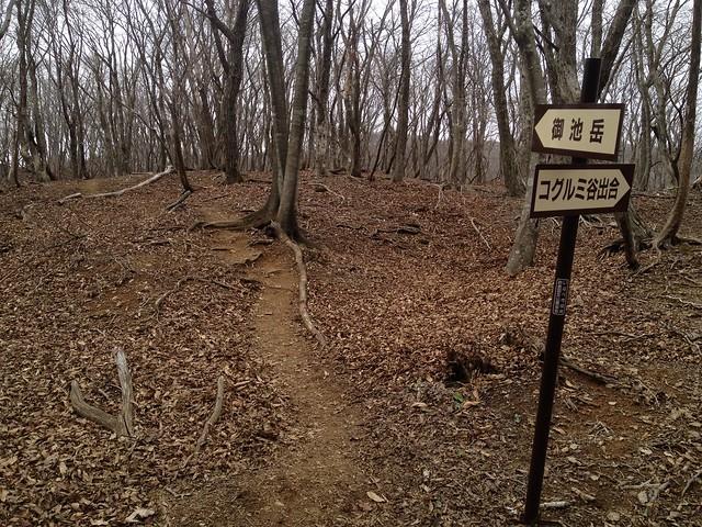 御池岳 コグルミ谷 天ヶ平