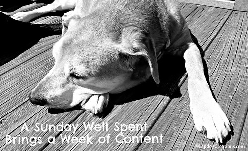 A Sunday Well Spent Brings a Week of Content - Just ask Sophie #happydog #rescueddog #LapdogCreations ©LapdogCreations