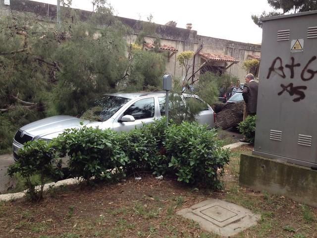 albero caduto rutigliano 6
