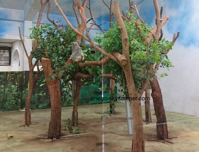 動物園 コアラ