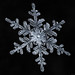 Snowflake-a-Day #52 by Don Komarechka