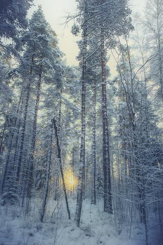 finland suomi talvi kuusankoski kouvola kylmä metsä colors colorful cold sun aurinko forest winter taivas tree puu scenery maisema landscape